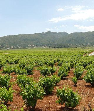 ワイン生産世界第3位、スペインのぶどう畑